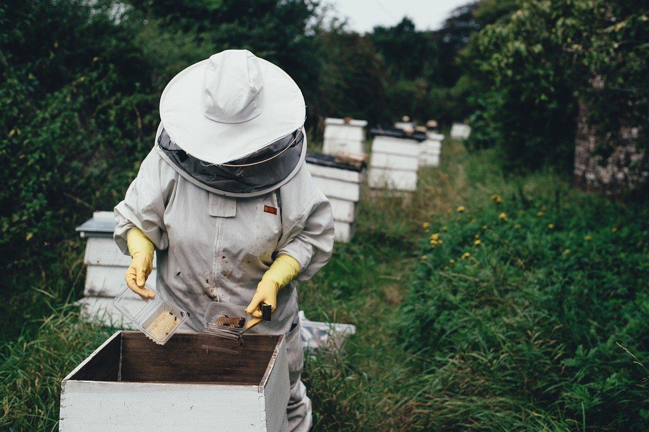 Pratiquer l'apiculture chez soi : est-ce possible ?
