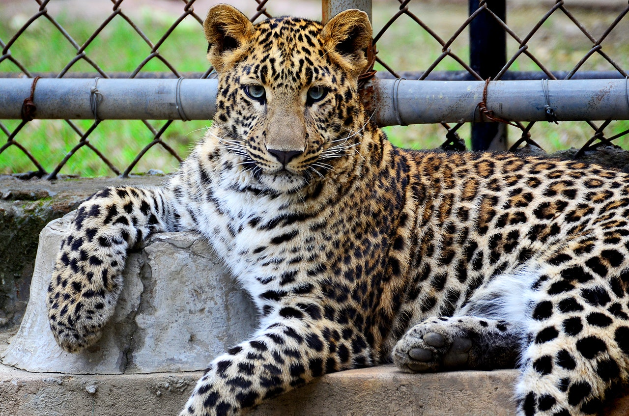 Comment devenir soigneur animalier et travailler dans un zoo ?