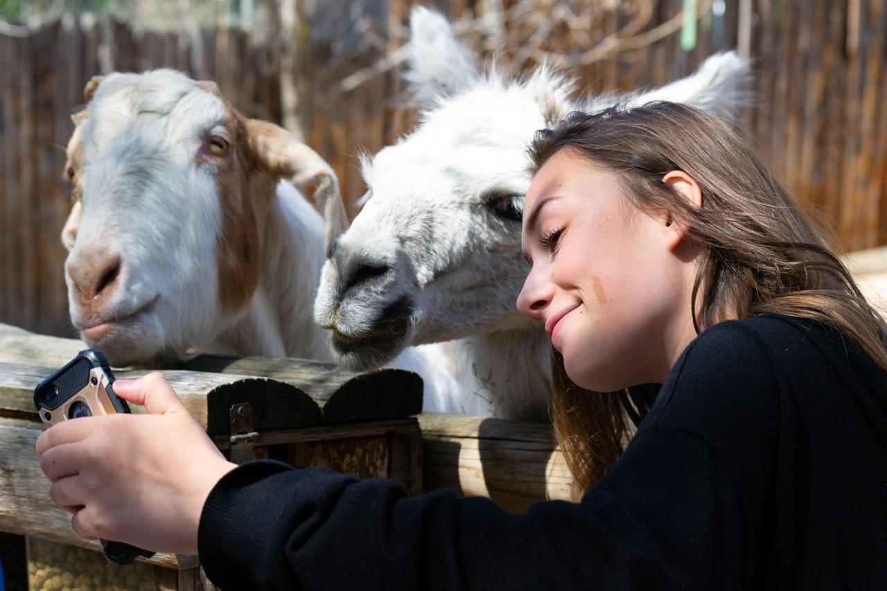 Top 5 des plus beaux zoos de France